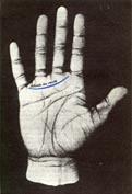 Queres aprender a leer las manos? Entra!
